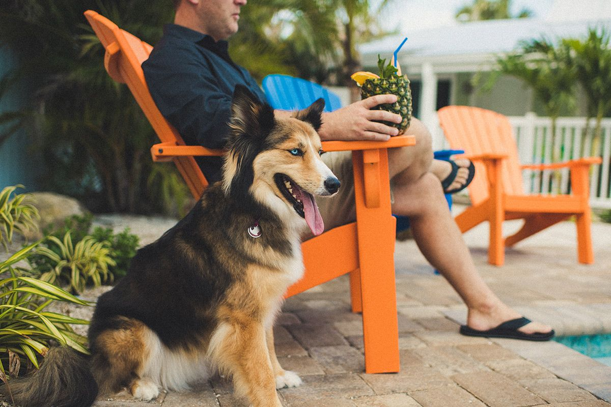 pet-friendly siesta key hotel rooms