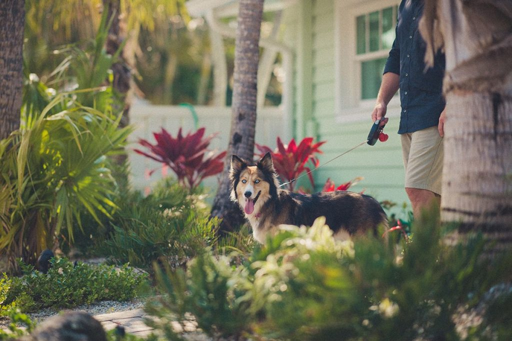 siesta key pet friendly resort